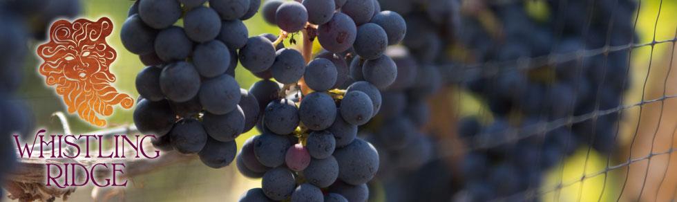 winery-in-newberg-oregon-whistling-ridge